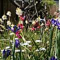 Gastil's Back yard in spring, M. Gastil-Buhl