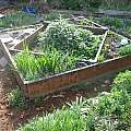 Raised bed boxes for growing bulbs, M. Gastil-Buhl