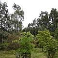 Harry's garden, Lee Poulsen