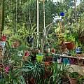 Balcony garden, Shlomit Heymann