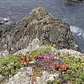 Allium dichlamydeum habitat, Bob Rutemoeller