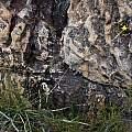 Bobartia paniculata, iNaturalist, Adriaan Grobler, CC BY-NC