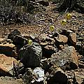 Calochortus raichei habitat, Bob Rutemoeller