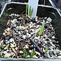 Seedlings, Travis Owen