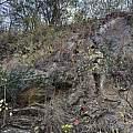 Cyrtanthus galpinii, Troos van der Merwe, iNaturalist, CC BY-NC