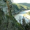 Drimia loedolffiae, Kei Mouth habitat, Ernst van Jaarsveld