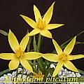 Empodium plicatum, Bill Dijk