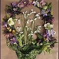 Galanthus bouquet, Jim McKenney