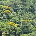 Griffinia intermedia, habitat, Alan Meerow