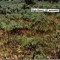 Calochortus venustus habitat, Hugh McDonald