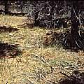 Calochortus venustus habitat montane, Hugh McDonald