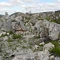 Lachenalia sargeantii habitat, Cameron McMaster