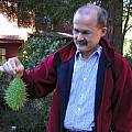 Marah macrocarpa fruit, Bob Rutemoeller