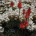 MCBG, succulent garden, Bob Rutemoeller