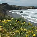 Sonoma Coast, Bob Rutemoeller