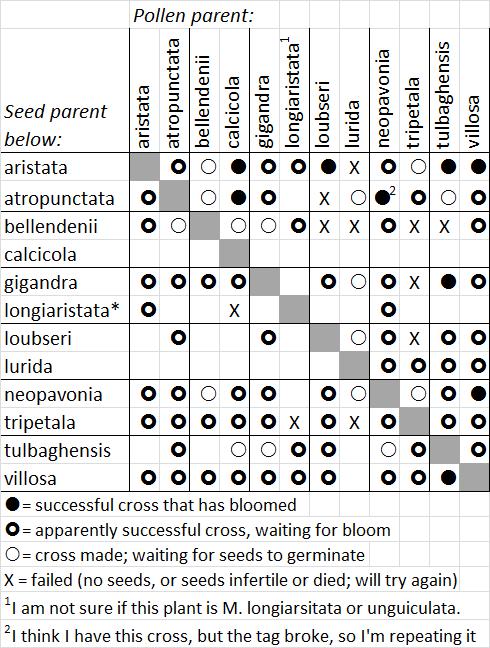 Chart of Moraea subgenus vieusseuxia crosses, Michael Mace
