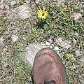 shoe surrounded by Moraeas, Cape Agulhas, Diane Whitehead