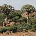 Namaqualand, Bob Rutemoeller