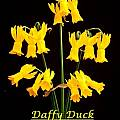 Narcissus 'Daffy Duck', Bill Dijk