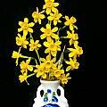 Narcissus 'Little Flik', Bill Dijk