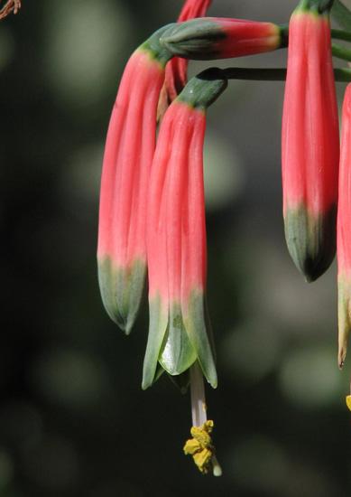 Big Planter Pots Promotion-Shop for Promotional Big