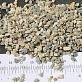 Granite chick grit, M. Gastil-Buhl