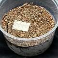 Vermiculite, M. Gastil-Buhl
