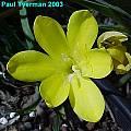 Sparaxis hybrid, Paul Tyerman